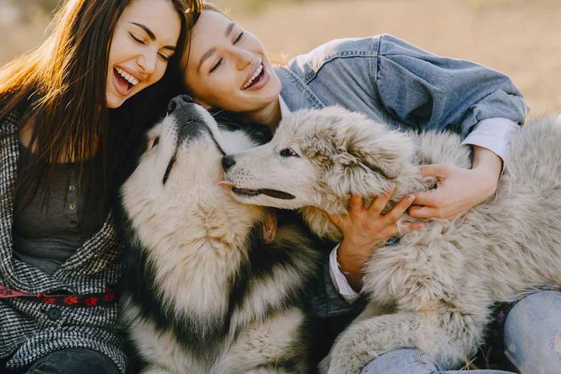 happy girlfriends caressing husky dogs in sunlight