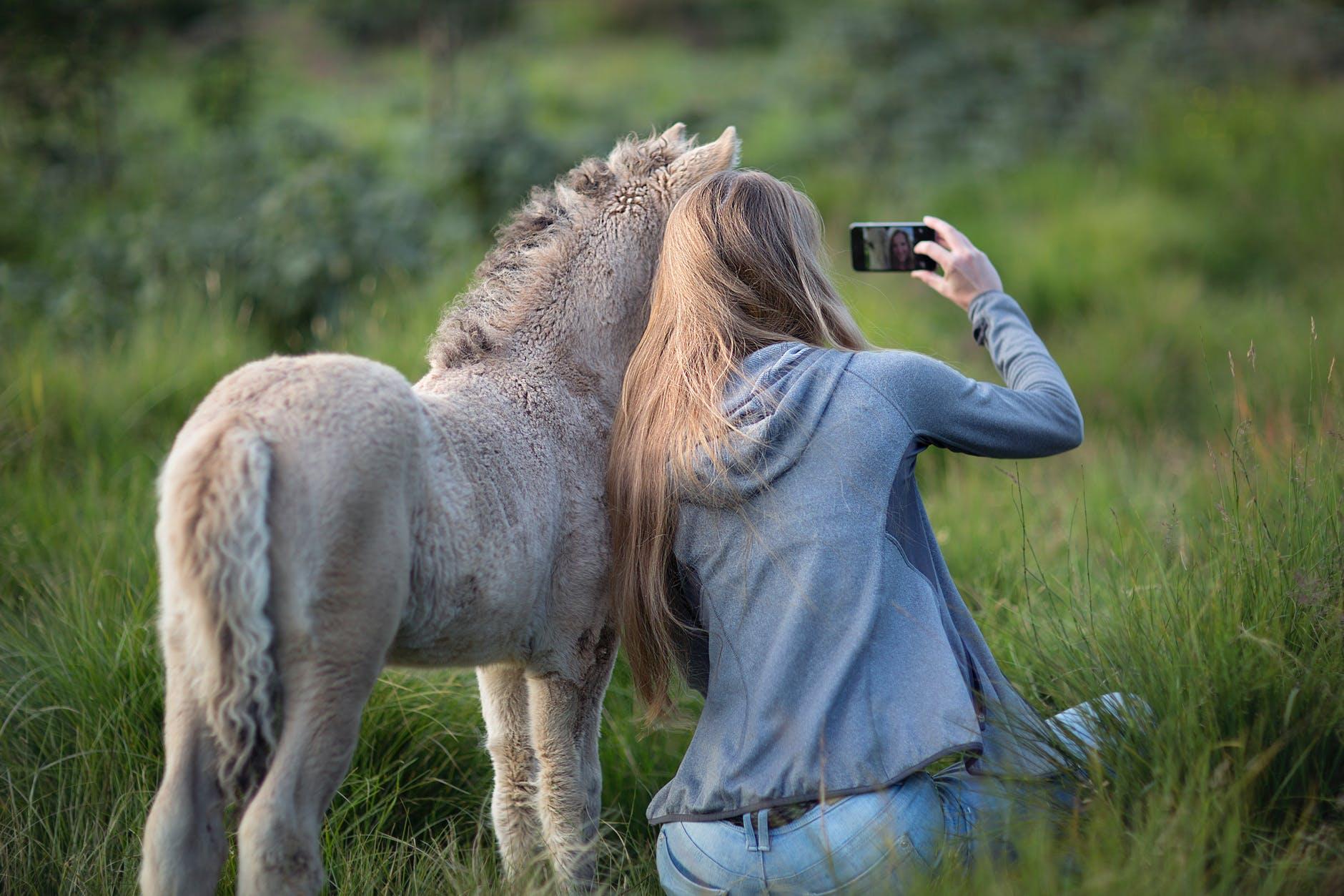 woman beside donkey taking selfie on grass